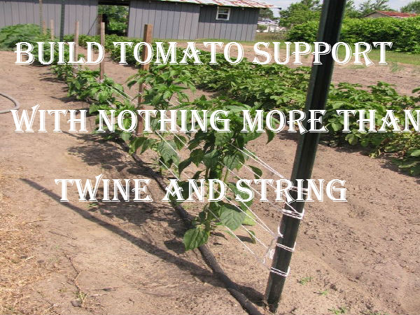 build tomato supports with nothing more than stakes and twine