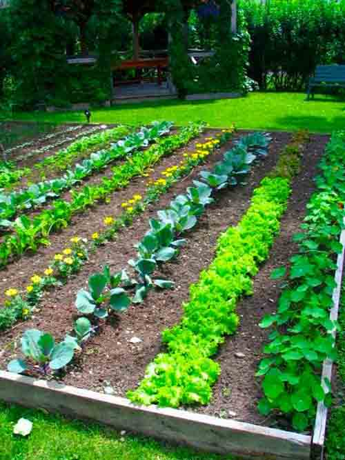 How To Make A Vegetable Garden Gardens The Raised Bed